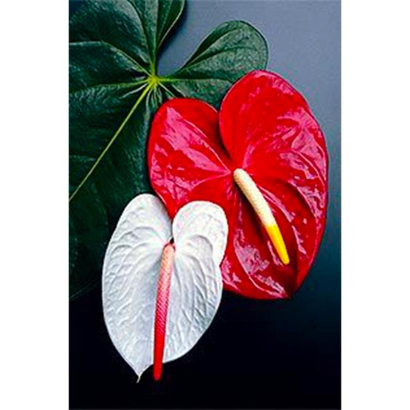 bijou-fleur-sathyne